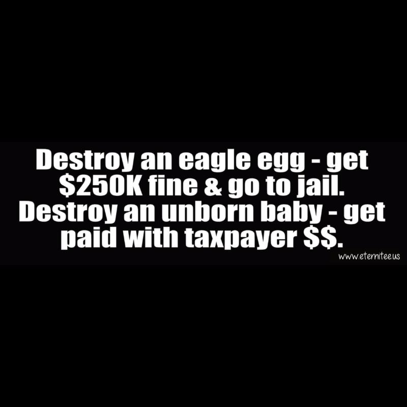 Destory An Eagle Egg